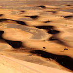 5 days marrakech desert tour - Merzouga Camel ride