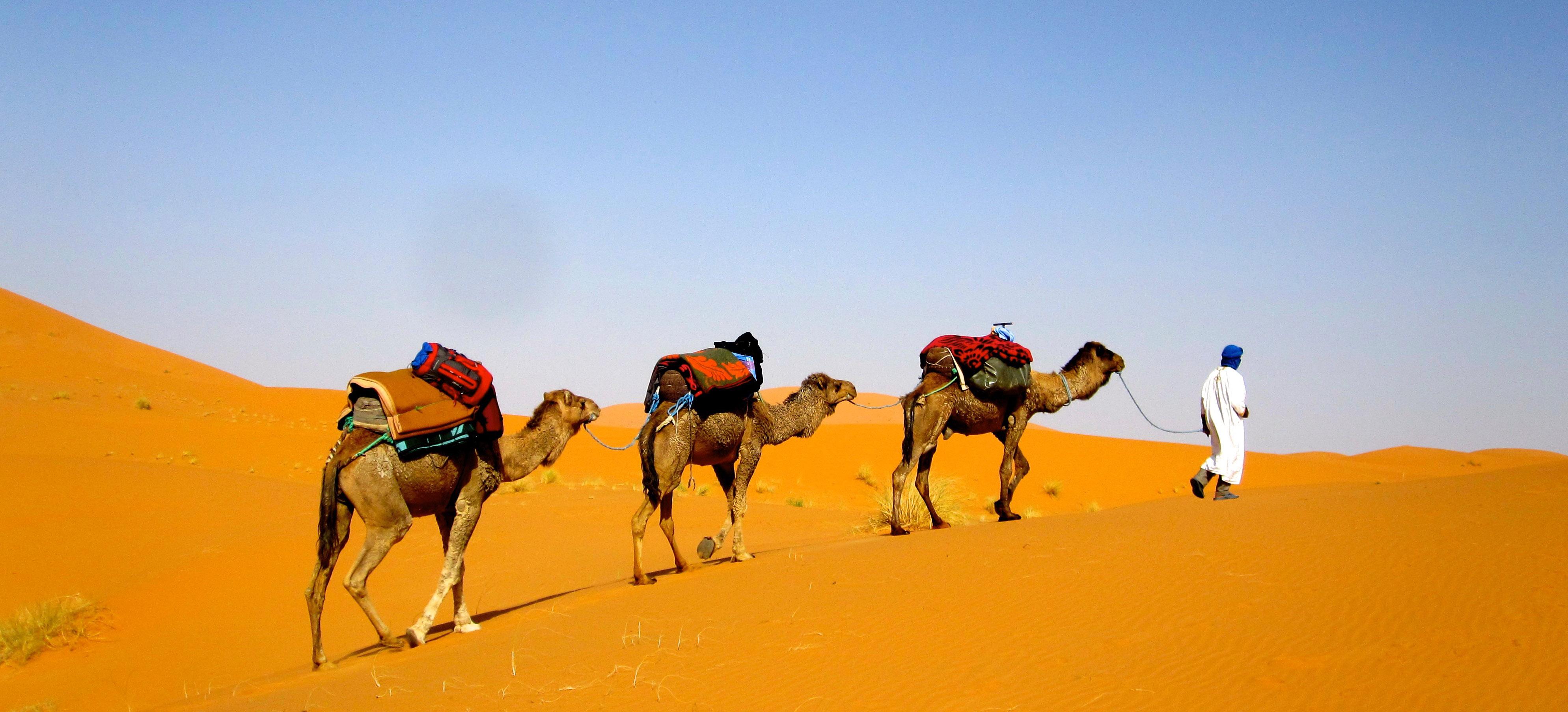 camel trek sahara desert